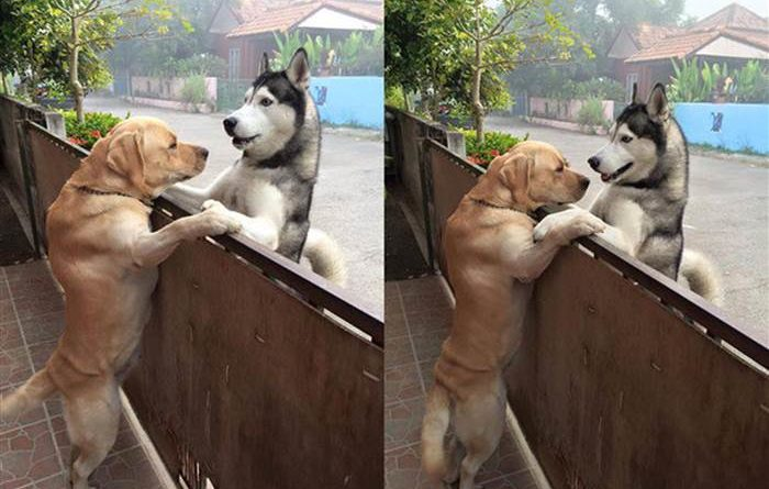 Dog sneaks out to hug neighborhood pal in viral photo – PetsOnBoard.com