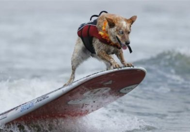 The World Dog Surfing Championships were a doggone good time – PetsOnBoard.com