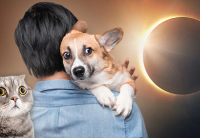 Can Your Pet Go Blind from the Solar Eclipse?- PetsOnBoard.com