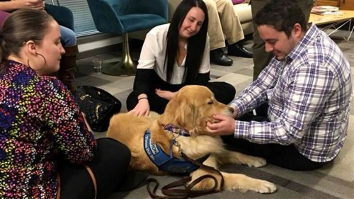 Therapy dogs comfort Las Vegas survivors: 'I had help when I felt helpless' – PetsOnBoard.com