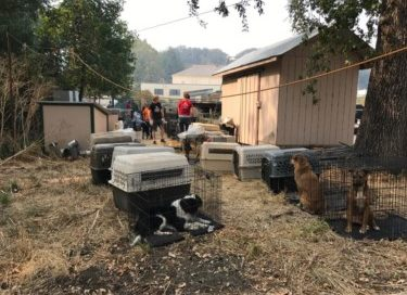 30 cats and 95 dogs are Evacuated from our Sanctuary