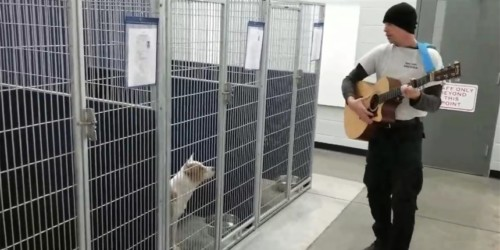 Animal control officer gives private concert to shelter dogs-PetsOnBoard.com