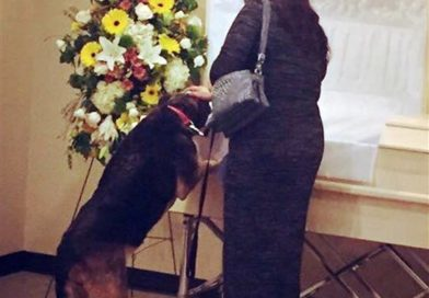 Dog visits funeral home for 1 last goodbye to beloved owner- PetsOnBoard.com