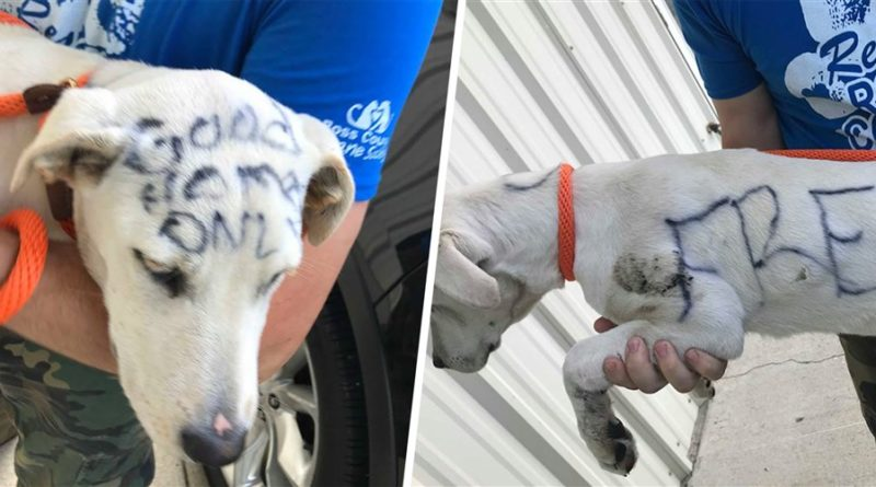 Abandoned dog labeled 'free' in permanent marker finds home- PetsOnBoard.com
