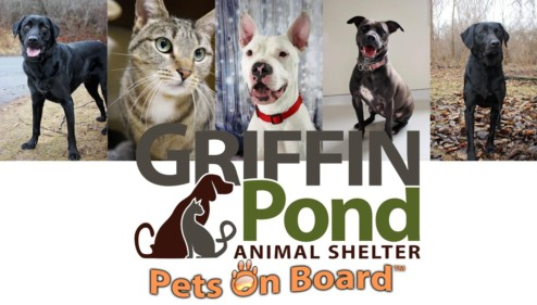 Griffin Pond Animal Shelter Dogs for Adoption Highlight, Daisy and Joey- PetsOnBoard.com